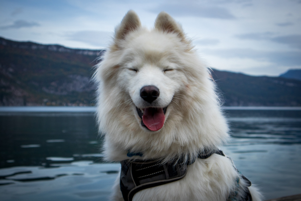 Happy dog