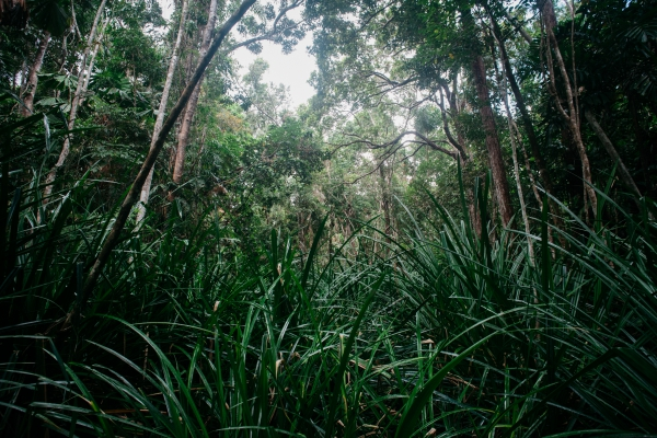 Foret tropicale australienne
